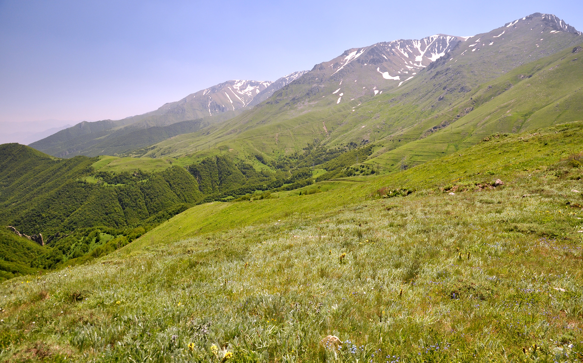 Mountain meadows in Kajaran environs